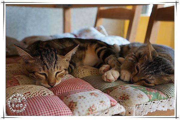 懒猫图片大全可爱