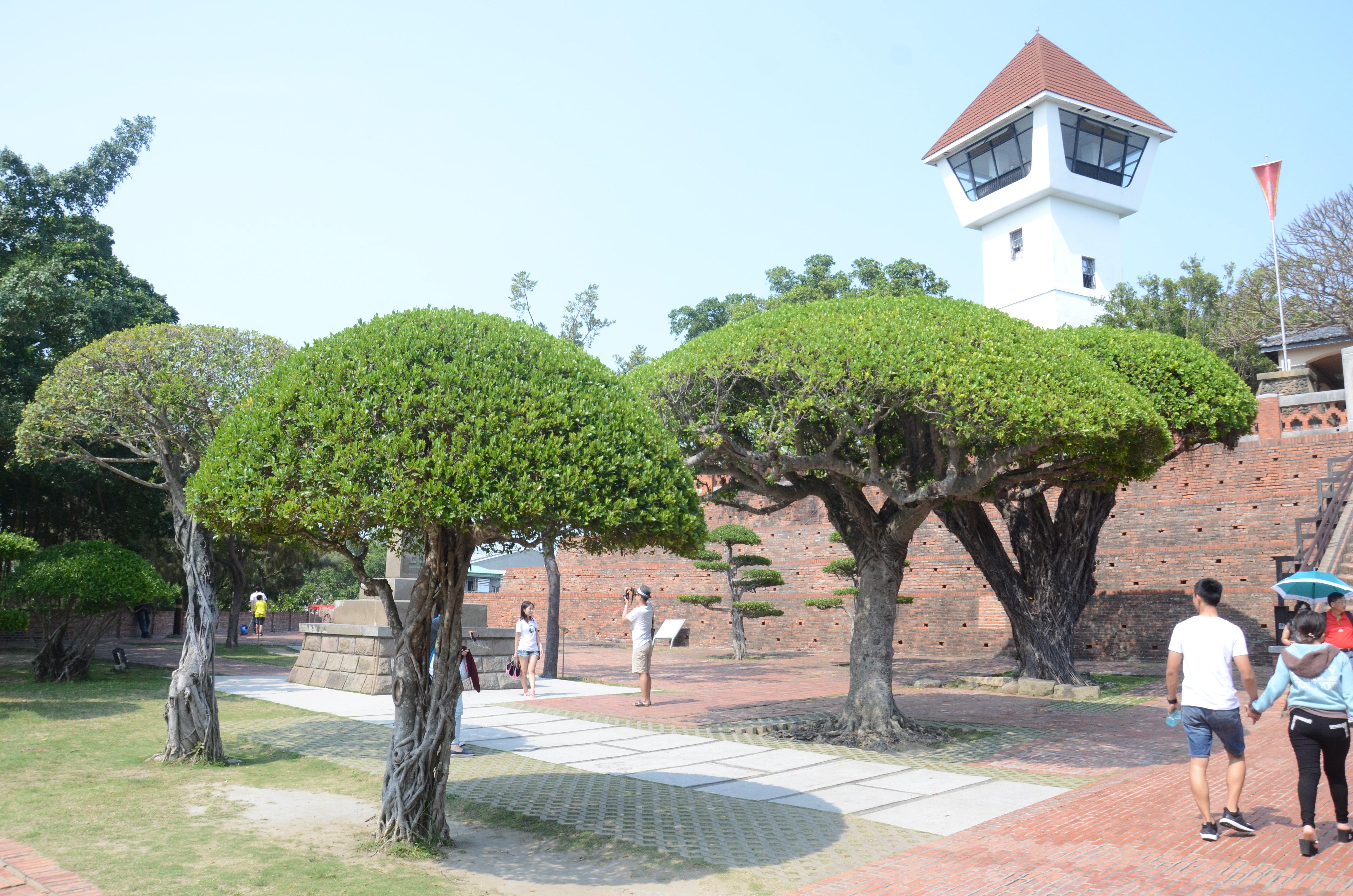 图13 安平古堡外的半圆状树冠